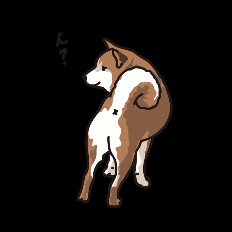 振り向く柴犬02