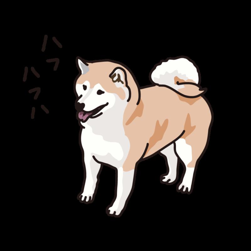 ハフハフ柴犬02