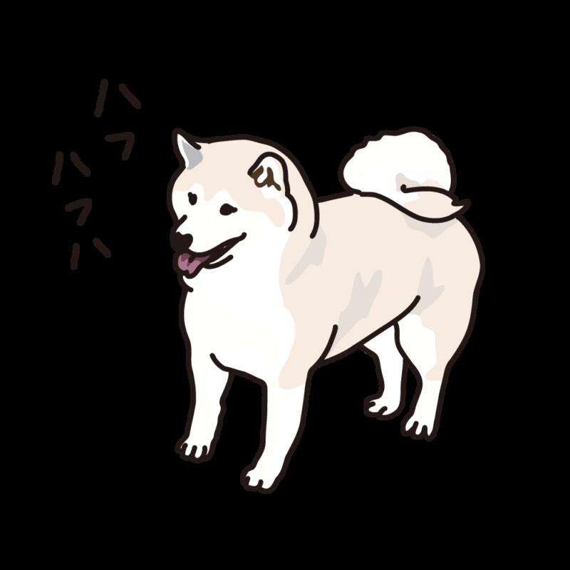 ハフハフ柴犬04