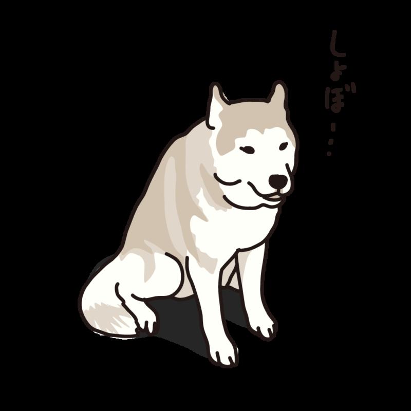 しょんぼりハスキー01