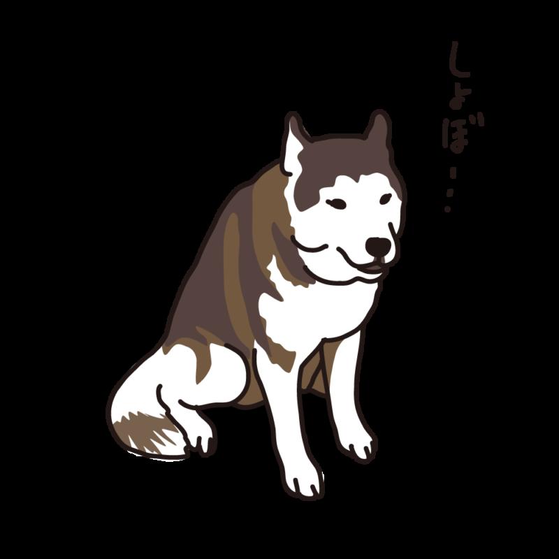 しょんぼりハスキー02
