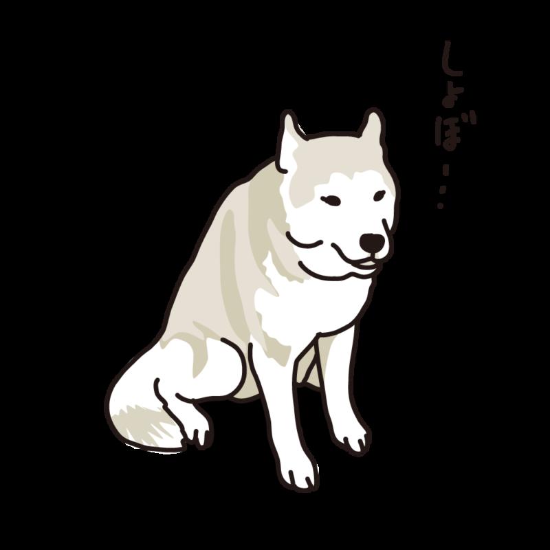 しょんぼりハスキー04