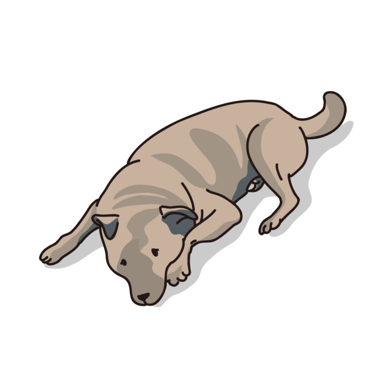 タレ犬05