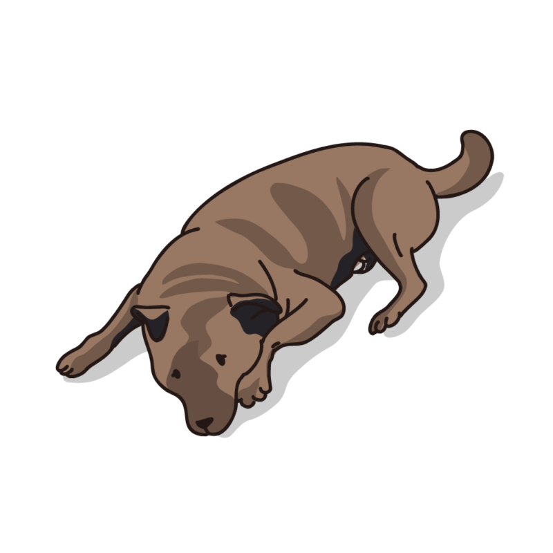 タレ犬01